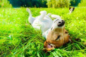 Die Sonne stärkt das Immunsystem der Haustiere
