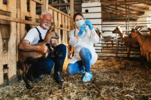 Eine Präventionsmaßnahme ist die Impfung
