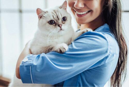 Akromegalie bei Katzen: Symptome und Behandlung
