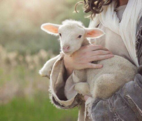 Neugeborene Kleinwiederkäuer und Durchfallerkrankungen