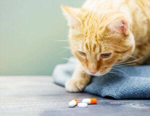 Die Akromegalie kann mit Medikamenten behandelt werden