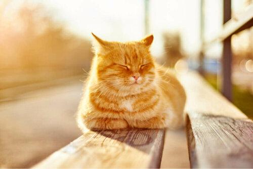 Was sind die Vorteile der Sonne für Haustiere?