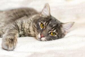 Wenn sich die Verhaltensauffälligkeiten der Katze nicht legen, sollte ein Tierarzt aufgesucht werden