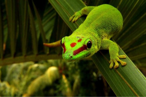Taggeckos: Pflege und Eigenschaften