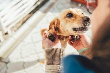 10 Dinge, die dir dein Hund sagen würde, wenn er sprechen könnte