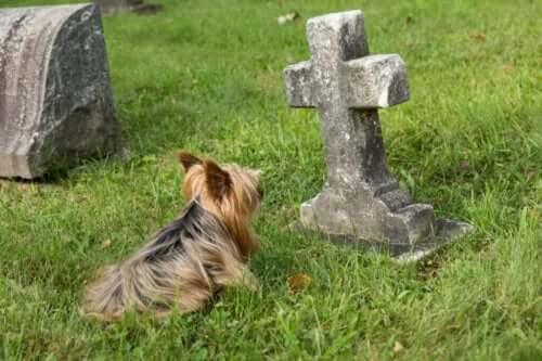 10 Anzeichen dafür, dass ein Hund stirbt