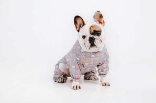 Ist das Tragen von Kleidung für Hunde bequem und angenehm?