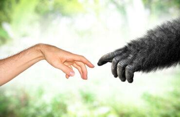 Lamarckismus - Evolutionstheorien in der Neuzeit