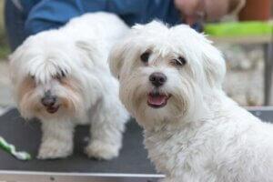 3 grundlegende Tipps für die Versorgung und Pflege eines Hundes