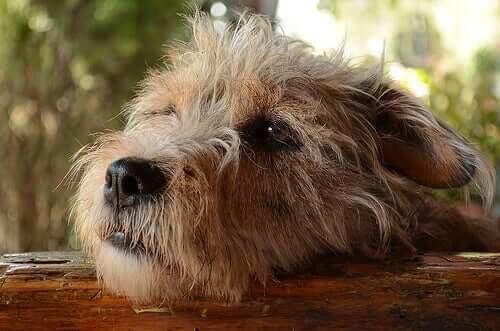 Haben Hunde wegen ihrer Streiche ein schlechtes Gewissen?