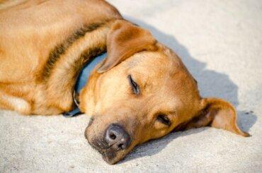 Warum lieben Hunde das Sonnenbaden?