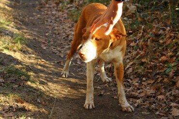 Warum ein Ehepaar im Tierheim keinen ausgesetzten Hund adoptieren durfte