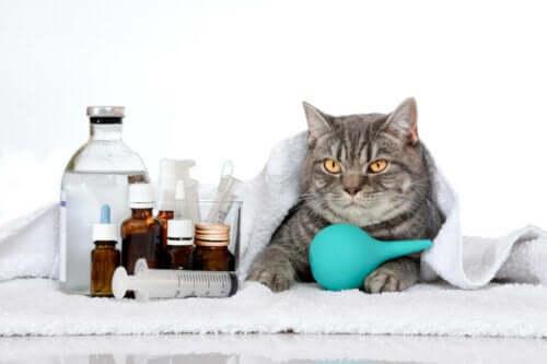 6 genetisch bedingte Erkrankungen bei Katzen