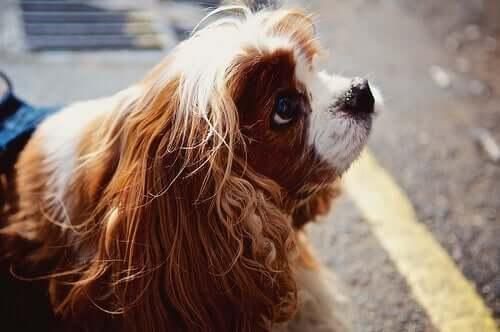 Wenn du mit deinem Hund sprichst, macht dich das klüger!