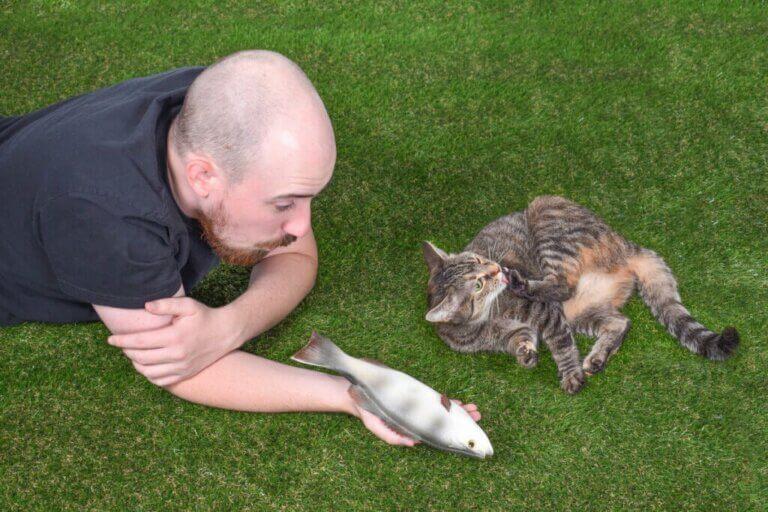Die soziale Interaktion einer Katze: 4 interessante Fakten