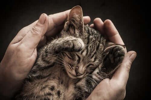 Katze niemals antun - Kätzchen
