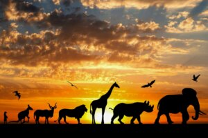 Lamarckismus - Vererbung - Tiere in Afrika