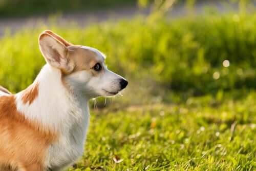Sonnenbaden - kleiner Hund