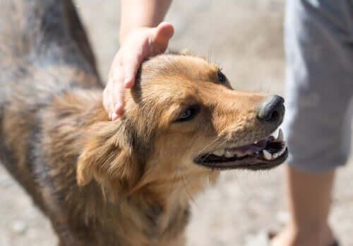 ausgesetzten Hund - Tier wird gestreichelt