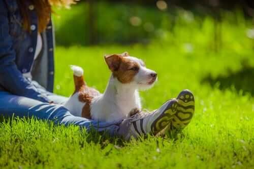 mit deinem Hund sprichst - in der Natur