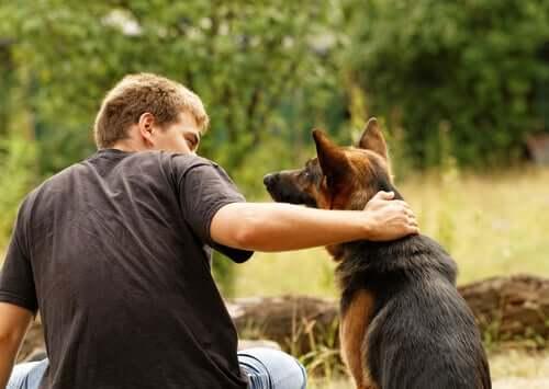 ruhigen Hund - Schäferhund