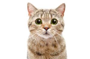soziale Interaktion - Foto einer Katze