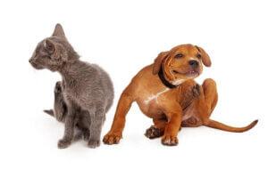 Atopie - Hund und Katze