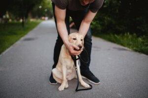 Ersticken von Hunden - Herrchen mit Hund
