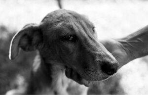 Hund stirbt - kurz vor dem Tod