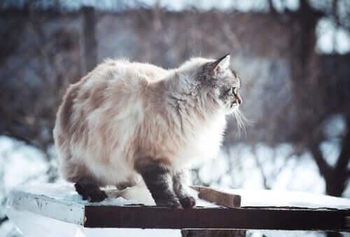 Katze niemals antun - Katze im Schnee