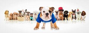 Kleidung für Hunde - angezogene Hunde