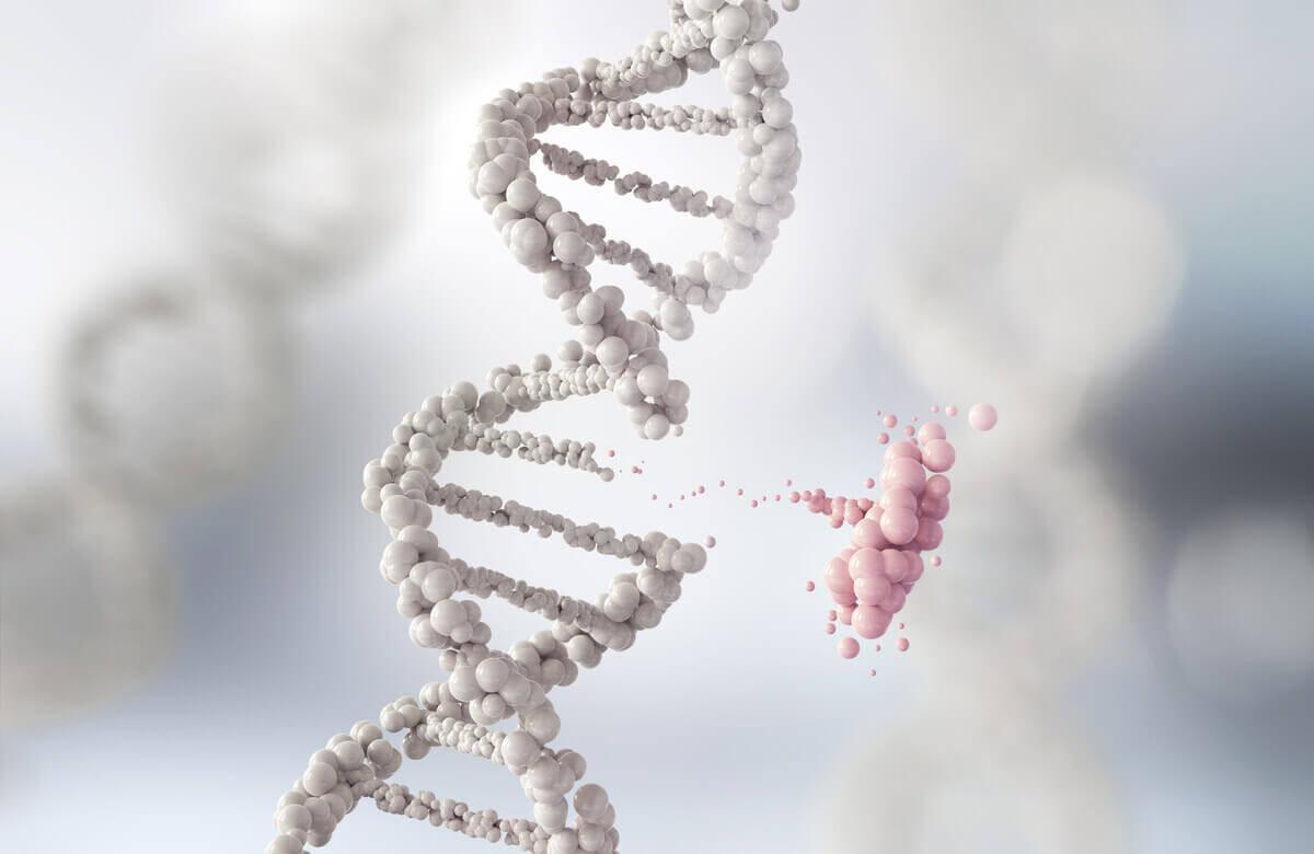 Lamarckismus - Vererbung - DNA-Helix