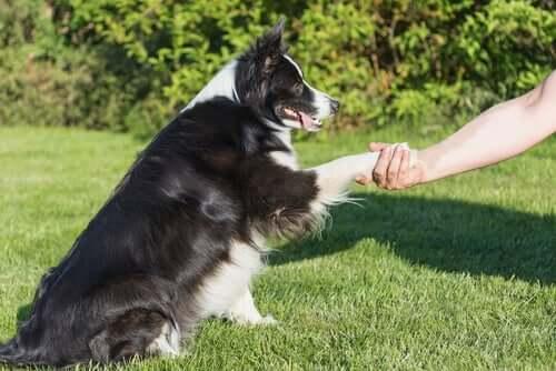 Streiche - Hund gibt Pfötchen
