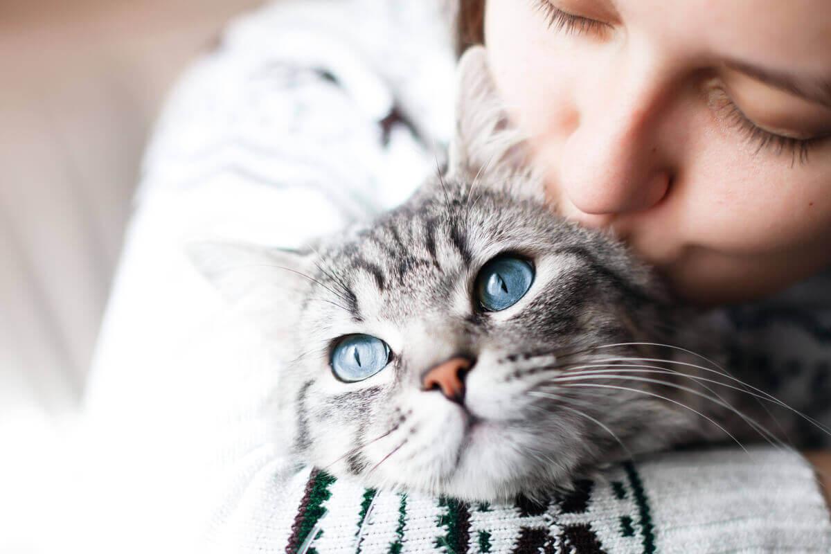 soziale Interaktion - Katze mit Frau