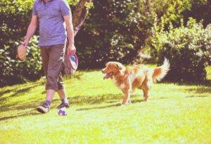 Es gibt einige emotionale Faktoren, die erklären warum Hunde ihren Besitzern folgen