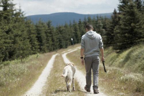 Warum folgen Hunde ihren Besitzern?