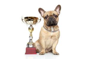 Die Animal Welfare Awards werden von einem Unternehmen für Tiergesundheit gesponsert