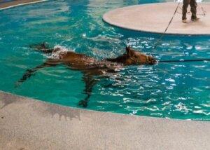 Ein Pool ist für die Physiotherapie großer Tiere gut geeignet
