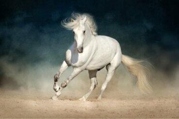 Koliken bei Pferden: Prävention und Früherkennung