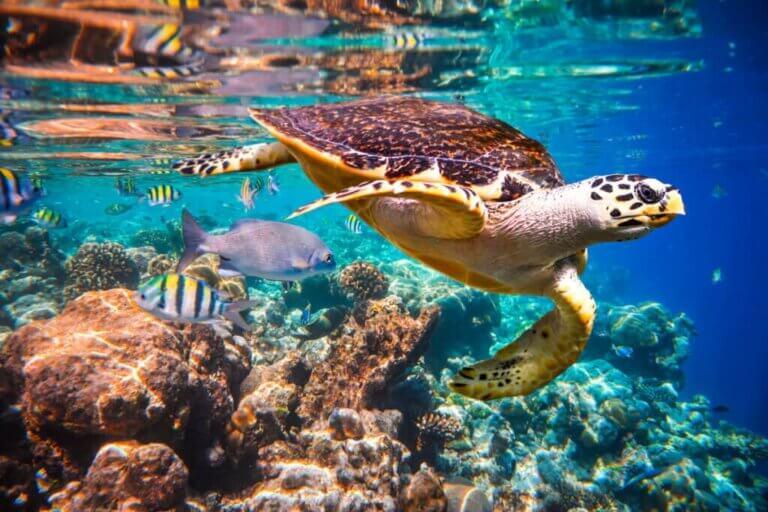 Meeresströmungen - Wie wirken sie sich auf die Meeresfauna aus?