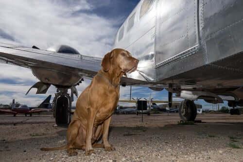 Hunde im Frachtraum von Flugzeugen - das sind die Gefahren