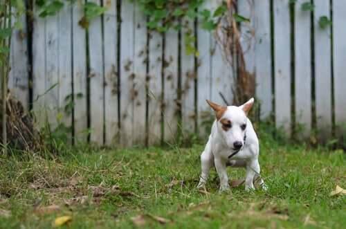 Behandlung von Durchfall - Hund im Garten