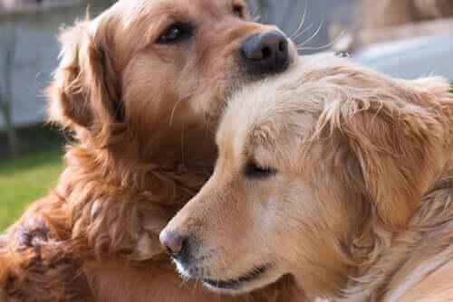Hunde haben Gefühle - zwei schmusende Hunde