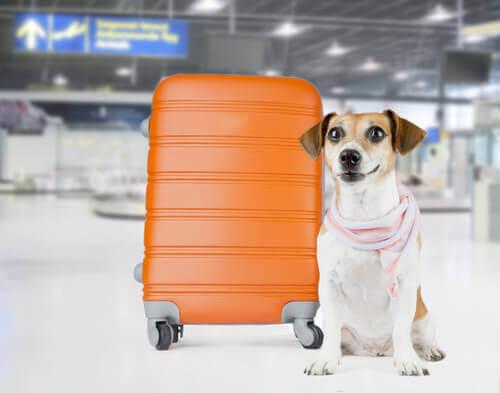 Hunde im Frachtraum - Koffer