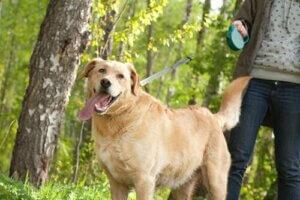 im Freien urinieren - Hund beim Spaziergang