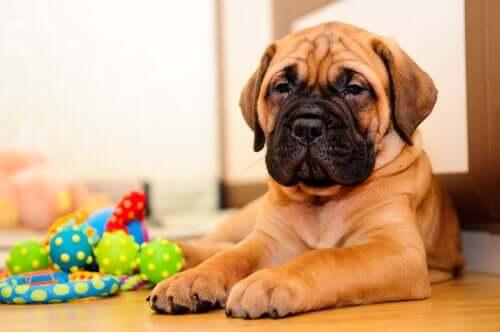 mit deinem Welpen - Hund mit Spielzeug