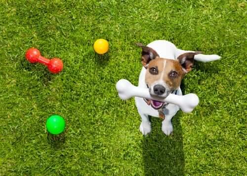 selbstgemachtes Hundespielzeug - glücklicher Hund
