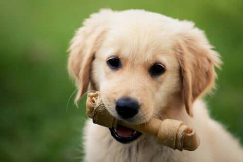 für Hunde giftig - Hund mit Knochen