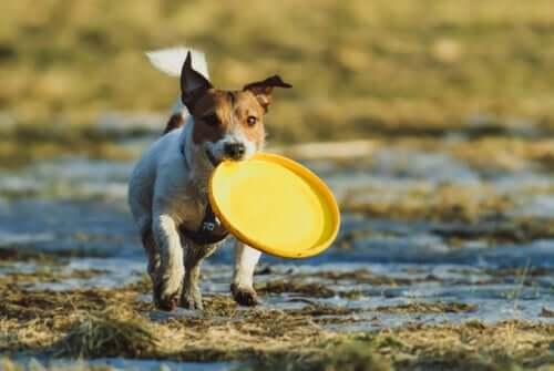 mit deinem Welpen - Hund mit Frisbee Scheibe