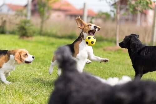 selbstgemachtes Hundespielzeug - Hund beim Fußball spielen